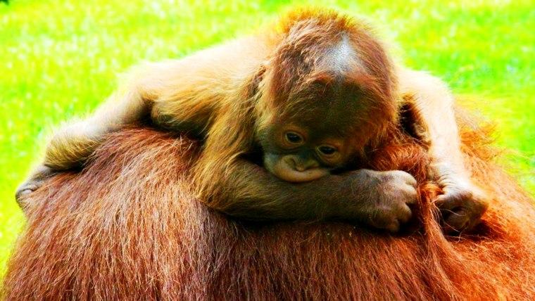 Leo Zoological Conservation Center