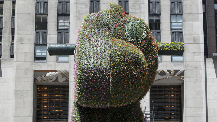"TODAY Show: Artist Jeff Koons' latest installation ""Split-Rocker"" begins to grow in the plaza outside of Rockefeller Center."