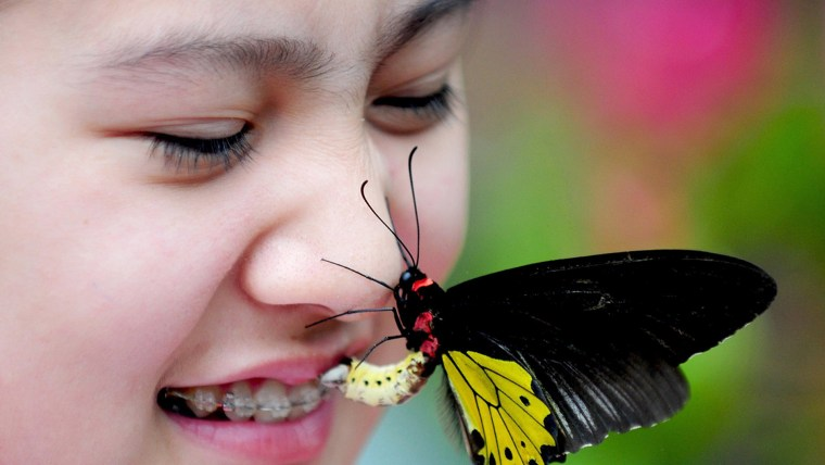 Image: A butterfly lands on the nose of a child.
