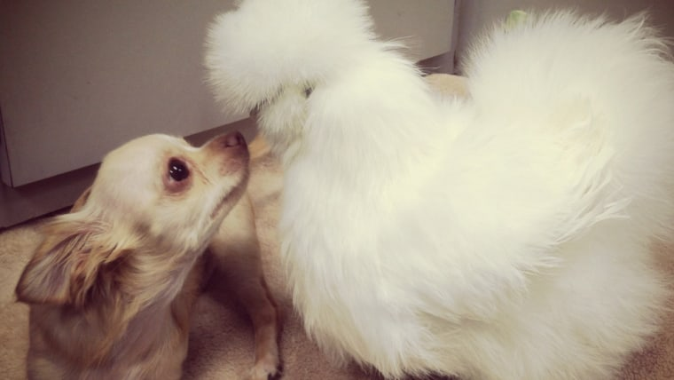 Roo and Penny share a kiss.