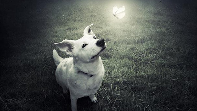 Animal-loving photographer creates surreal art to save shelter pets