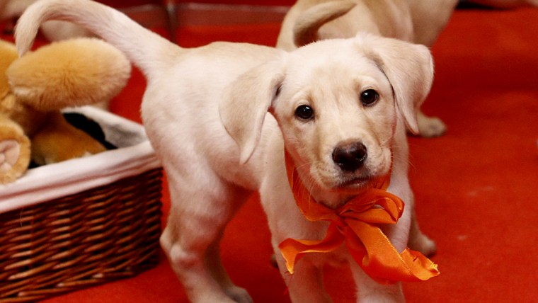 National Puppy Day is Friday! Start celebrating now with these 12 photos