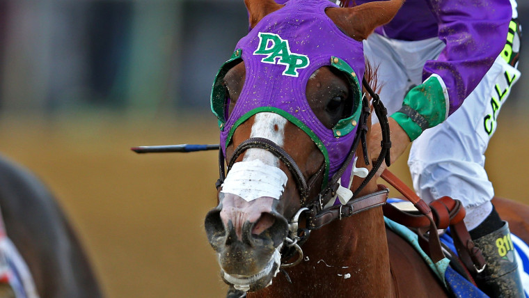 FILE - MAY 19, 2014:  It was reported that the New York Racing Association approved the use of a nasal breathing strip on the horse California Chrome ...