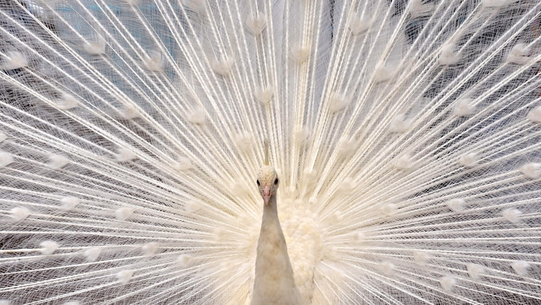A peacock shows off and 14 more of the week's best animal photos