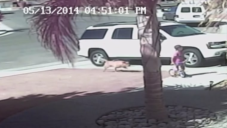 Dog chased away by 'hero cat'