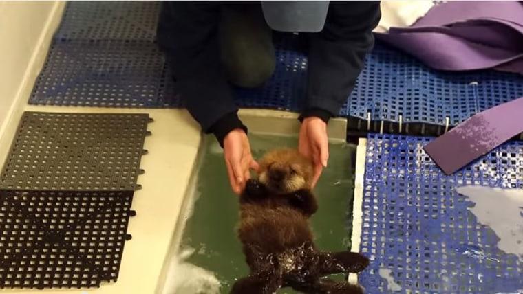 Shedd Aquarium/YouTube