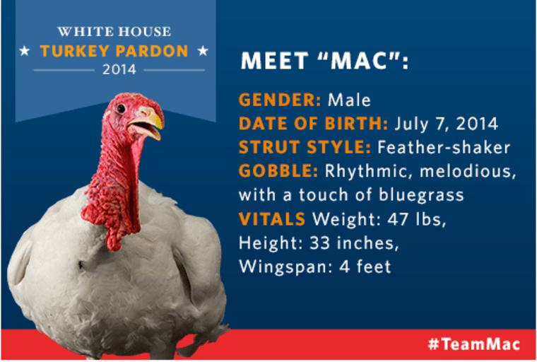 Mac the turkey