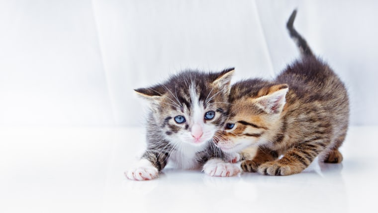 Curiosity may kill the cat, but here's why it's good for your memory