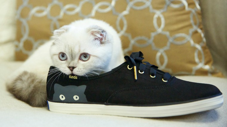 Taylor Swift's cat Olivia in a Keds ad