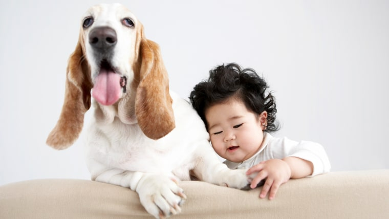 Japanese baby touching dog's foot on sofa, infant, Horizontal, Indoors, Close-up, Animal, In A Row, Dog, Baby, 12-23 Months, Cute, Color Image, Sticki...