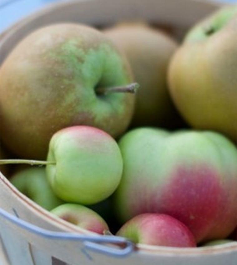 Apples for dry cider