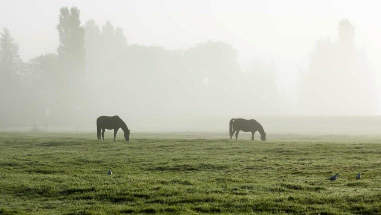 Horses in a field on a foggy morning near Berkel en Rodenrijs, the Netherlands, on Oct. 3.