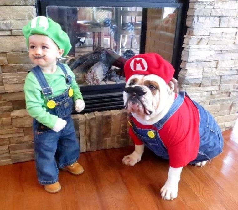 Mario And Luigi Dog Costumes Janessa Morton Resendes Sc 1 St Today