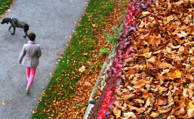 Woman walks dog past leaf-covered wall