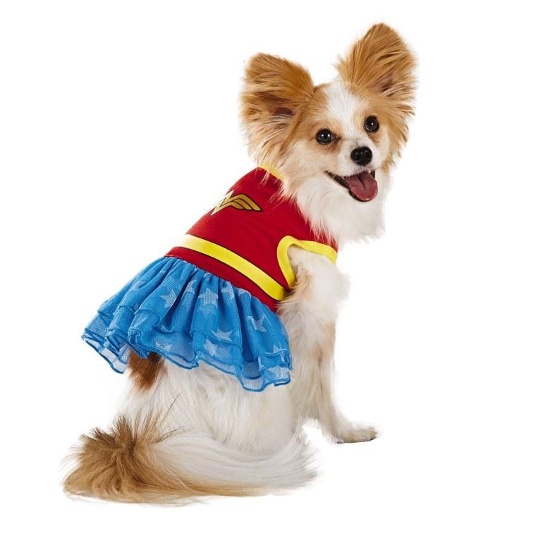 Dog in SuperWoman costume