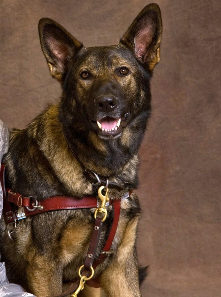 Xxon the dog