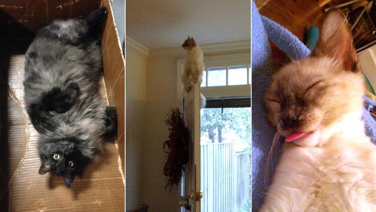 Cats in three funny photos