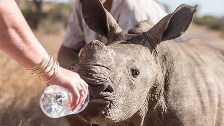 Image: Baby rhino
