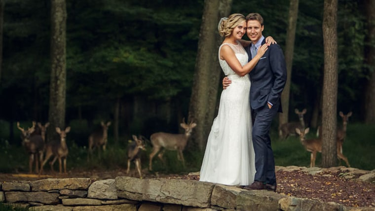 Deerly beloved: Surprise guests gather in couple's amazing wedding photo