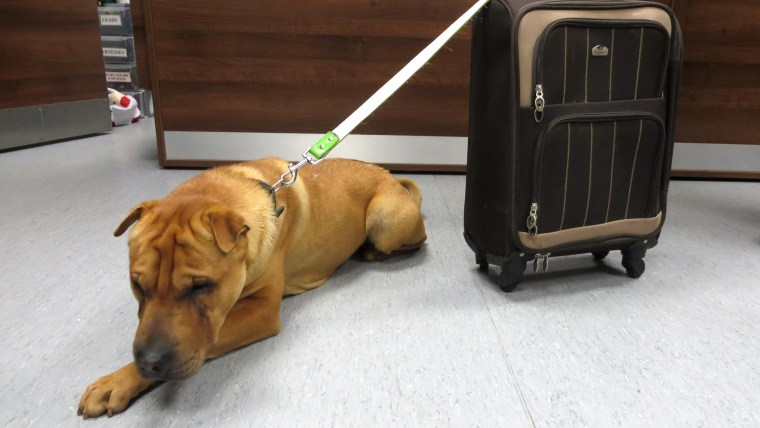 More than 100 people have offered to adopt Kai, according to the Scottish SPCA.