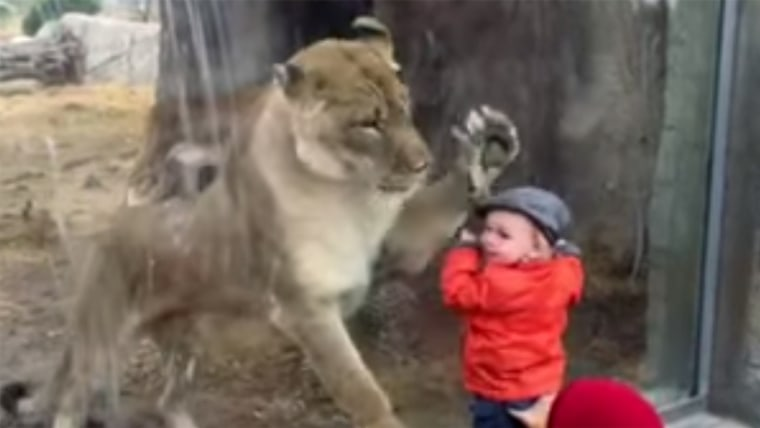 Baby with lioness