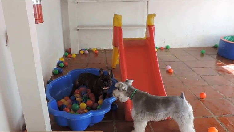 Dogs Park via YouTube