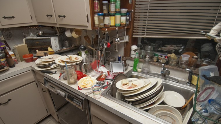 Roaches Kitchen Sink