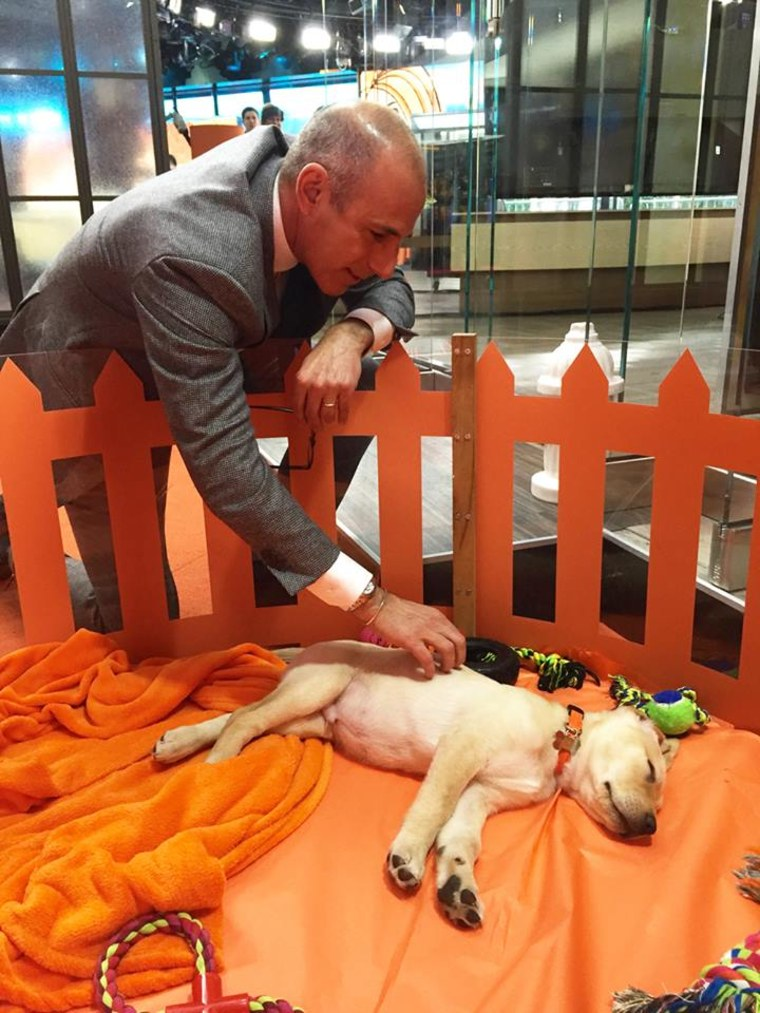 Matt Lauer said goodbye to (a very sleepy) Wrangler before heading out after his chat.
