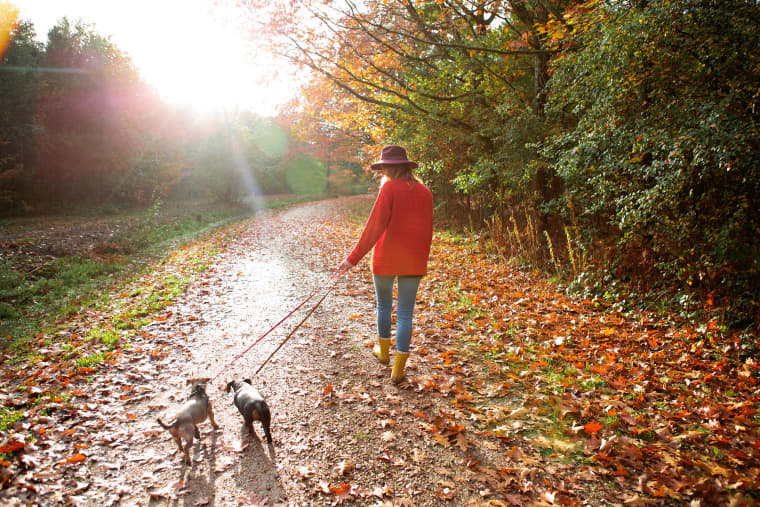 Image: A woman walks dogs in an autumn woodland