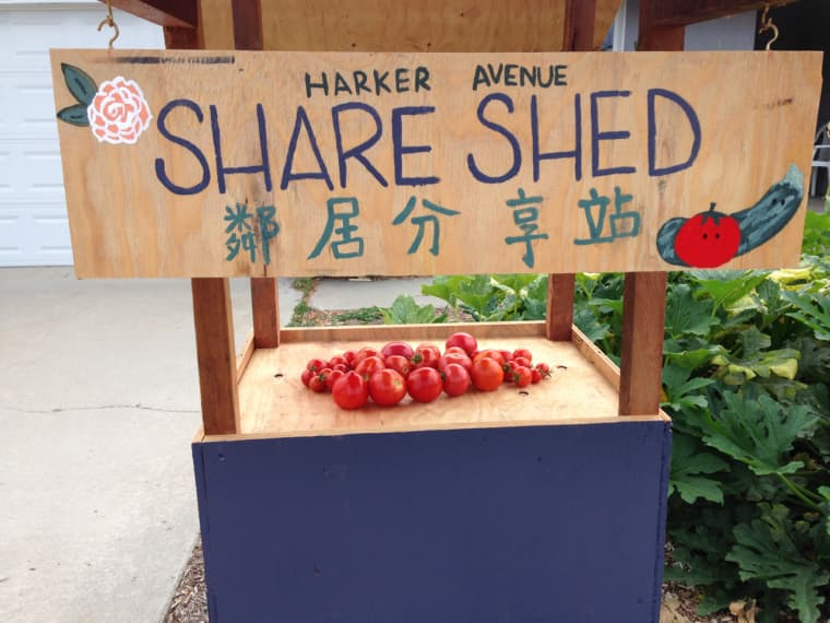 """Garden grown tomatoes ready for sharing, courtesy of the """"Share Shed."""""""