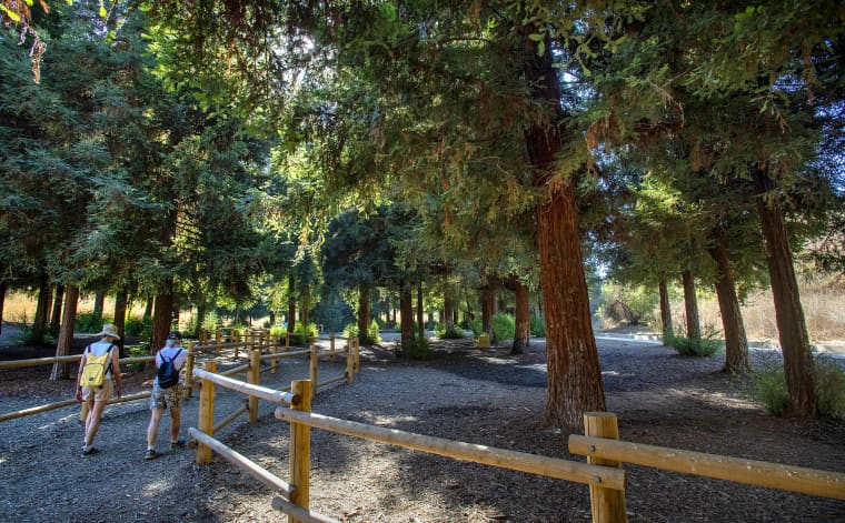 Orange County's secluded redwood forest