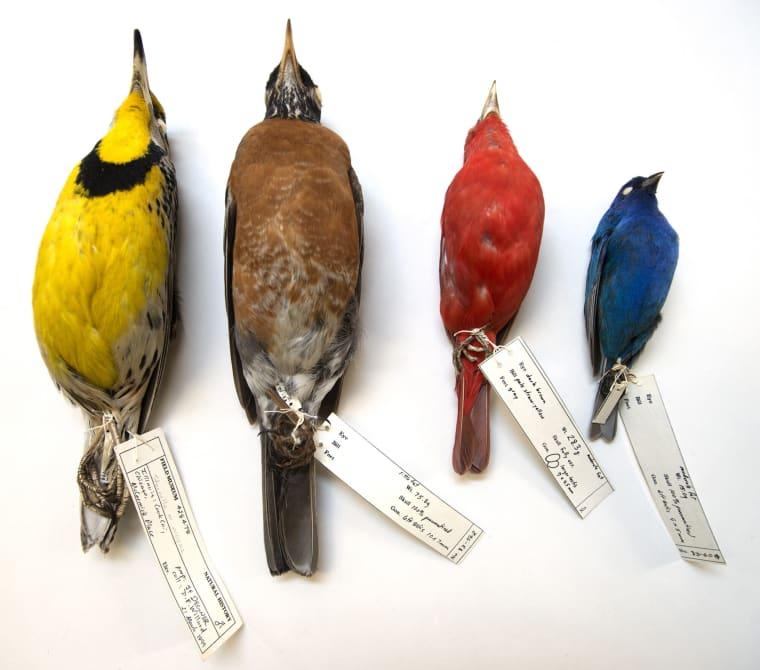 Image: Migratory Birds