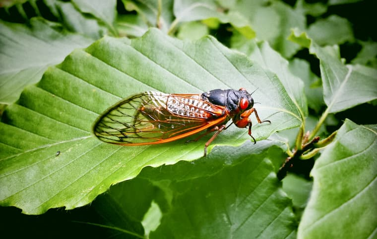 Image: A cicada in Virginia.