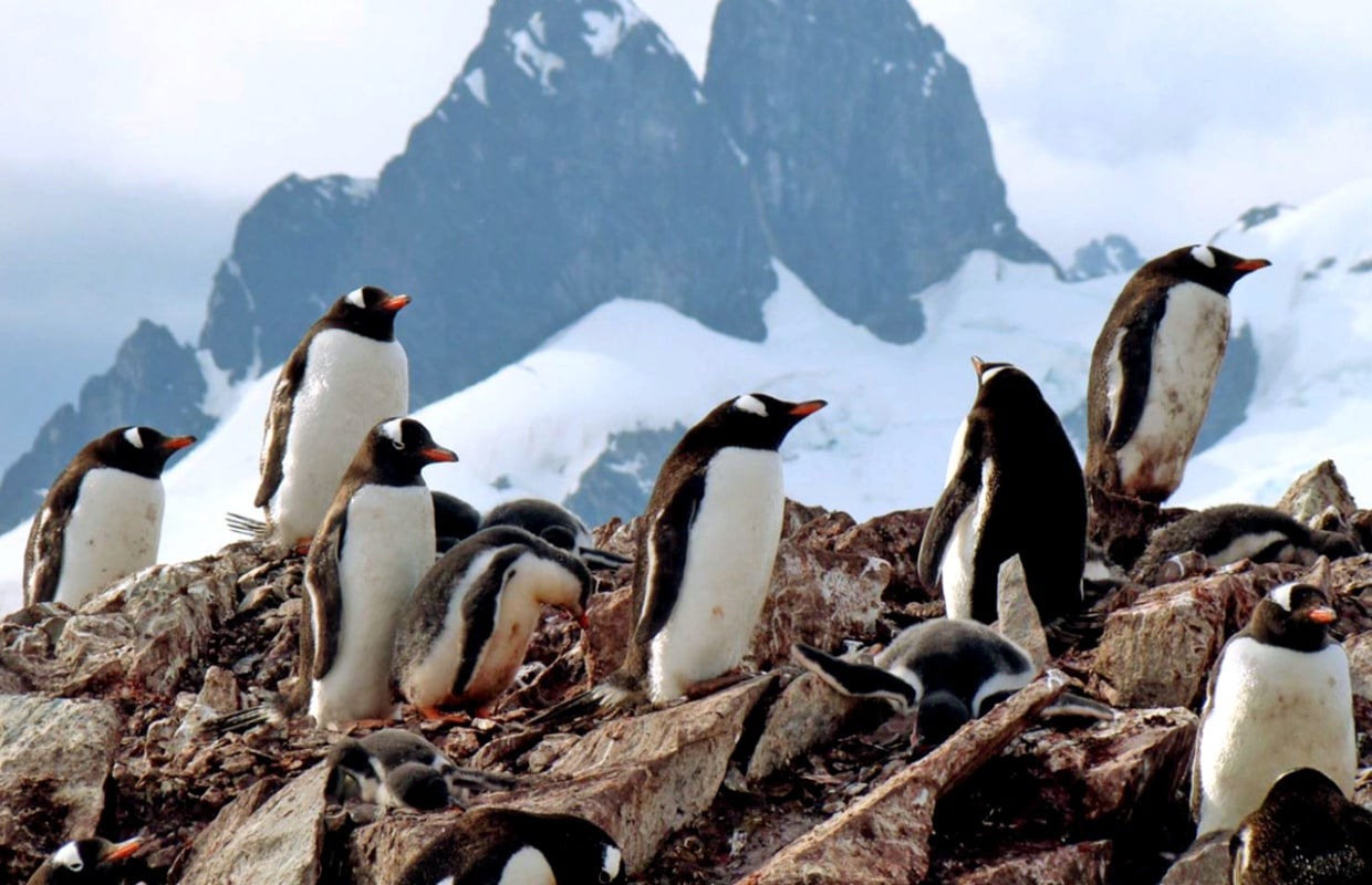 Antarctica: Journey to the bottom of the Earth