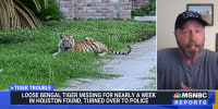 Exotic pet specialist Tim Harrison talks about 9-month-old Bengal tiger India being found after it escaped from its owner's home last week