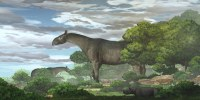 Fossils of giant rhinos found in China, largest land mammals ever