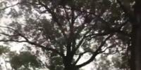 First Hurricane Ida death reported in Louisiana
