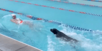 dressel holds a toy swimming as he is chased by his black lab swimming behind him in a swim lane