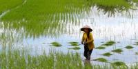 Mekong Delta.