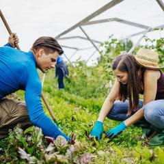 Couple Carefully Maintaining Farm Plot Together