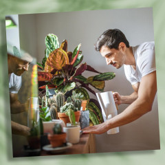 Illustration of a man watering his mini planters that are sitting on a window sill and a Woman hanging a planter indoors. Experts explain how to choose the best indoor pot to keep your plants healthy. Shop plastic plant pots, ceramic planters, hanging pla
