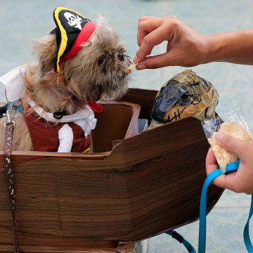 Image: Pet owner feeds her Terrier puppy wearing a pirate costume as they take part in 'A Petrifiying Trail Pet' costume party at a mall in Pasay city