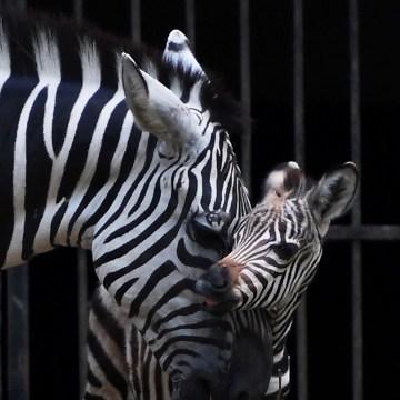 Image: INDIA-ANIMAL-WILDLIFE
