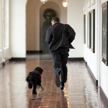 Image: Barack Obama, Bo