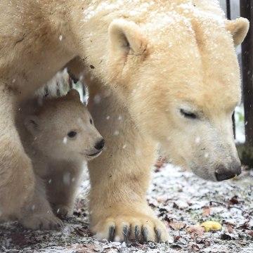 Image: FRANCE-ZOO-POLAR-BEAR