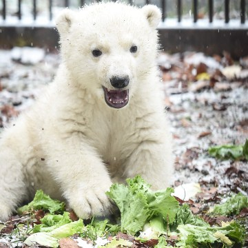Image: FRANCE-ZOO-BEAR