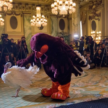 Image: Turkeys 'Peas' and 'Carrots' introduced ahead of the pardoning of the National Thanksgiving Turkey, in Washington, DC, USA