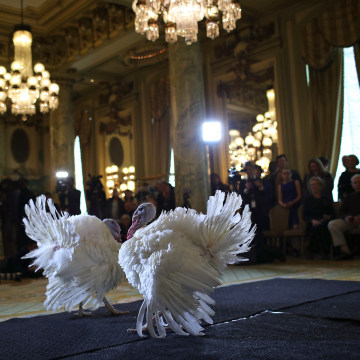 Image: National Thanksgiving Turkeys Meet The Press Before Official Presidential Pardon