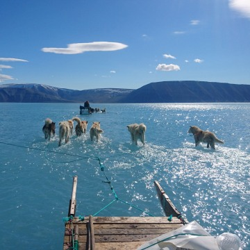 Image: Sled dogs wade through standing water on the sea ice during an Danish Meteorological Institute expedition in northwestern Greenland on June 13, 2019.