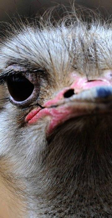 Image: CHINA-ANIMAL
